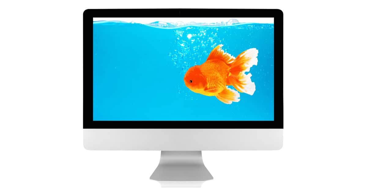 Aquatic Telehealth Consultation
